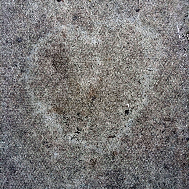 Pavement Heart
